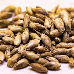Bamboo seeds, Dendrocalamas Sericeus 1 pack 20 seeds – เมล็ดไผ่ ซางหม่น 1 ชุด 20 เมล็ด