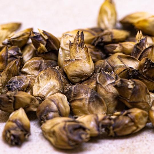 Dendrocalamus Brandisii 20 seeds - เมล็ดไผ่ หกหวาน หลินซาง 20 เมล็ด bamboo seed