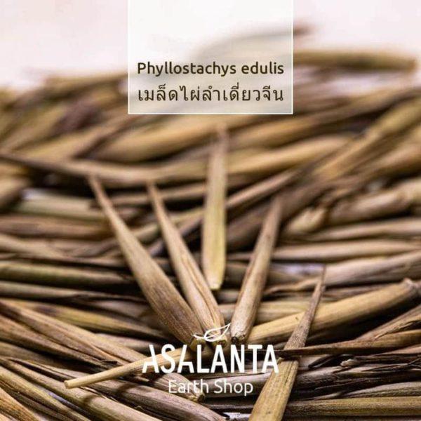 Bamboo seeds, Phyllostachys Edulis 1 pack 20seeds - เมล็ดไผ่ ลำเดียว จีน 1 ชุด 20 เมล็ด